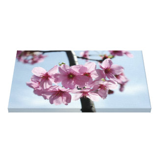 Pink cherry blossoms and light-blue sky canvas print
