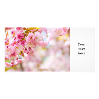 Pink cherry blossoms background photo greeting card