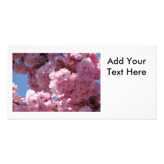 Pink Cherry Blossoms Photo Card