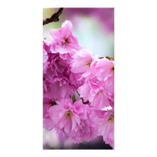 Pink Cherry Sakura Tree Customized Photo Card