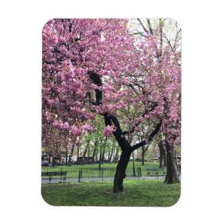 Pink Cherry Tree Blossoms Springtime New York City Magnet