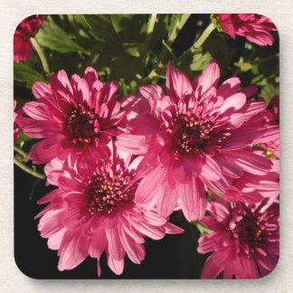 Pink Chrysanthemum Flowers Coaster