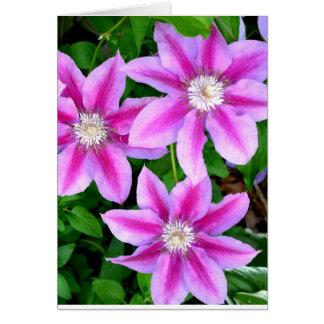 Pink Clematis  and wild Oregano Card