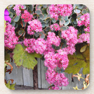 Pink Cliff Stonecrop Flowers Coaster