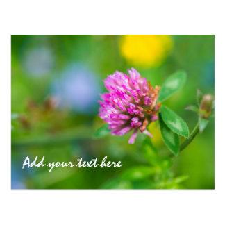 Pink clover flower postcard