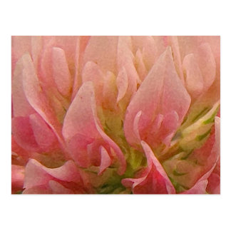 Pink Clover Postcard