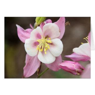 Pink Columbine Card