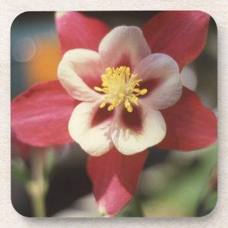 Pink Columbine Star Coaster