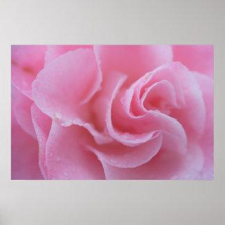 Pink Common Camellia Print