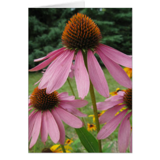 Pink Cone Flowers Card
