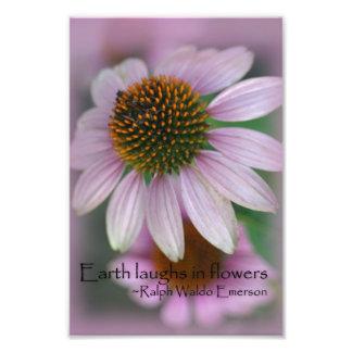 Pink coneflower macro photography print nature art