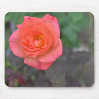 Pink Coral Rose Nature Photography Flower Plant Mouse Pad