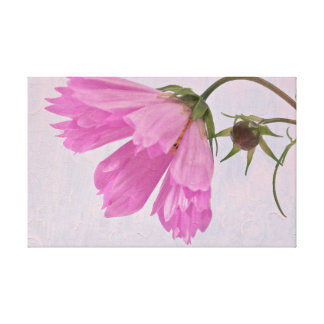 Pink Cosmo Canvas Print