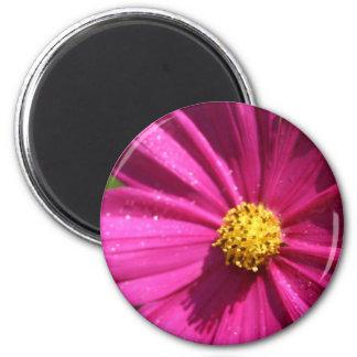 Pink Cosmos 6 Cm Round Magnet