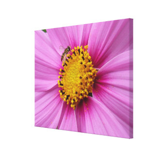 Pink Cosmos and Bee Wildflower Canvas Print