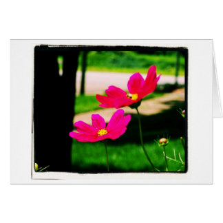 Pink Cosmos Note Card