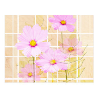 Pink cosmos cosmo flower cream yellow background postcard