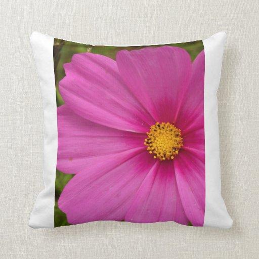 Pink Cosmos Pillows