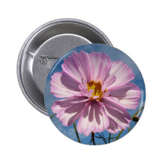 Pink Cosmos flower against blue sky 6 Cm Round Badge