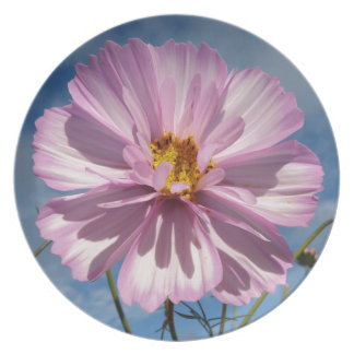 Pink Cosmos flower against blue sky Plate