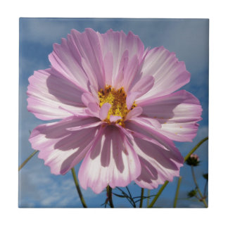 Pink Cosmos flower against blue sky Small Square Tile