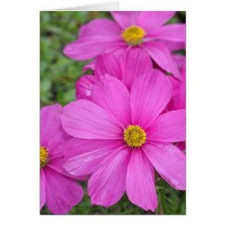 Pink cosmos flower garden greeting card
