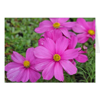 Pink cosmos flower print greeting card