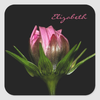 Pink Cosmos Flower With Name Square Sticker