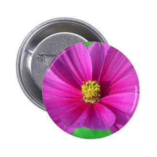 Pink Cosmos flowers Button