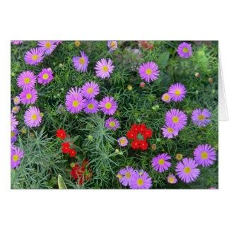 Pink Cosmos flowers Greeting Cards