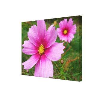 Pink Cosmos Flowers Gallery Wrapped Canvas