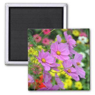 Pink cosmos flowers print magnet