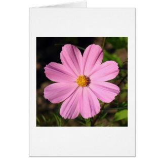Pink Cosmos Greeting Card