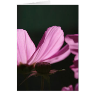 Pink Cosmos in the sun #1 Greeting Card