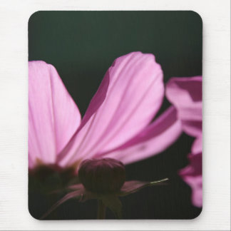 Pink Cosmos in the sun #1 Floral Photography Mouse Pad