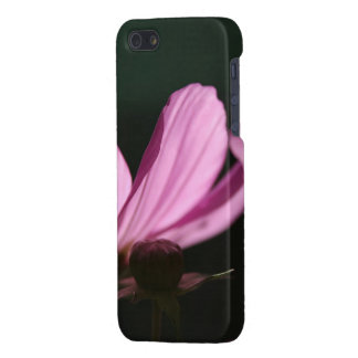 Pink Cosmos in the sun #1 Flowers iPhone 5/5S Covers