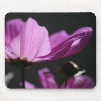 Pink Cosmos in the sun #2 Floral photography Mouse Pad
