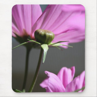 Pink Cosmos in the sun #3 Floral Photography Mouse Pad