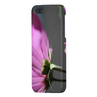 Pink Cosmos in the sun #3 Flowers iPhone 5 Case