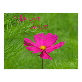 Pink Cosmos Invitation Postcard