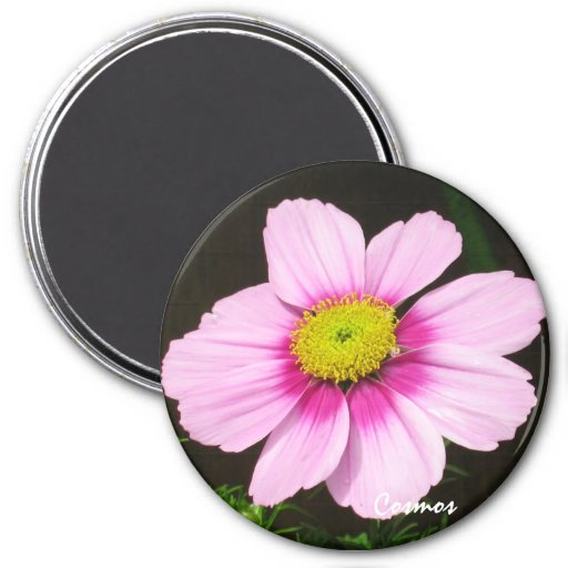 Pink Cosmos Magnet