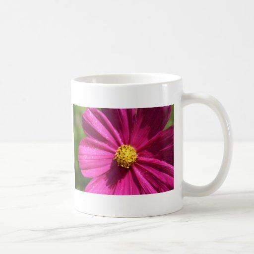 Pink Cosmos Coffee Mugs