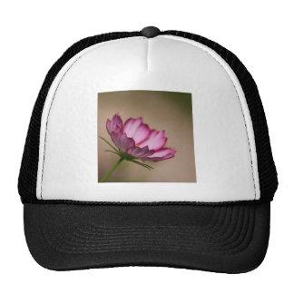 Pink cosmos picote Blossom Cap