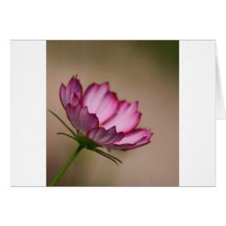Pink cosmos picote Blossom Greeting Card