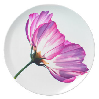 pink cosmos plates