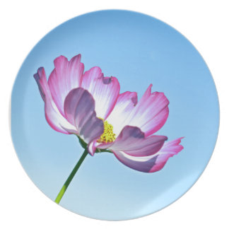 pink cosmos party plates