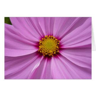 Pink Cosmos Pretty Wildflower Photography Card
