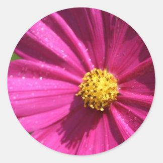 Pink Cosmos Round Sticker