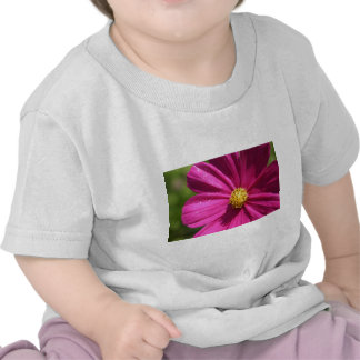 Pink Cosmos T Shirt