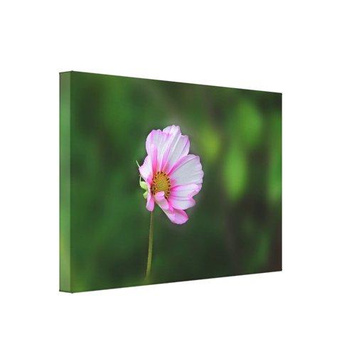 Pink Cosmos Wildflower Canvas Canvas Prints